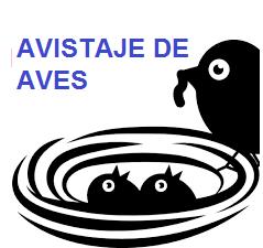 AVISTAJE.png